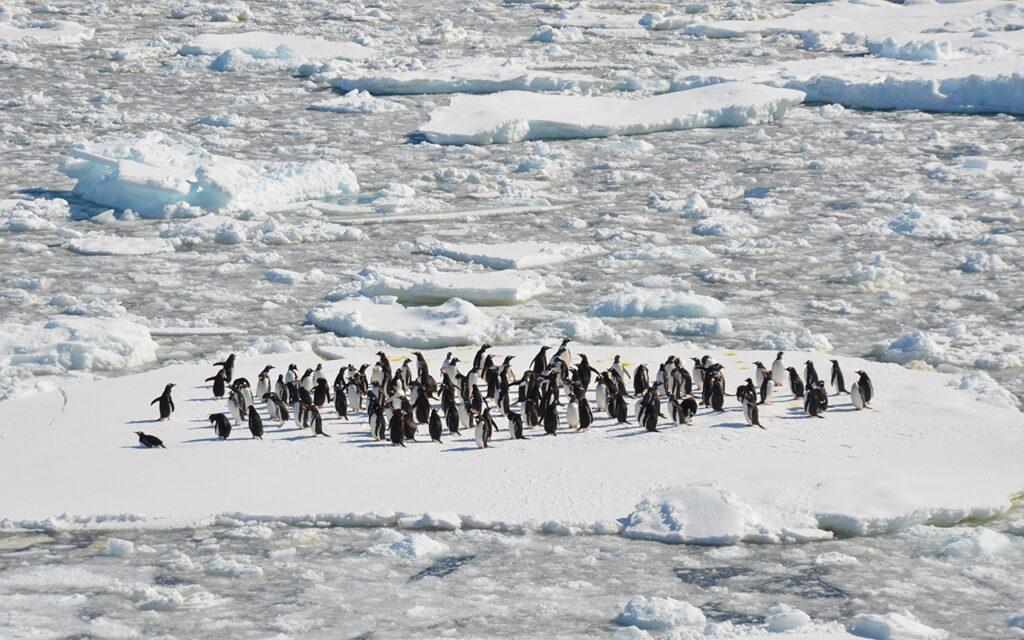 'Mal precedente': critican planes de Australia para construir un aeropuerto en Antártica
