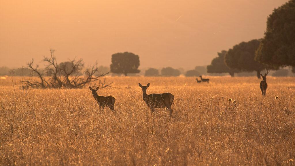 Reservas de caza en Sudáfrica tienen que sacrificar animales ante baja en visitantes