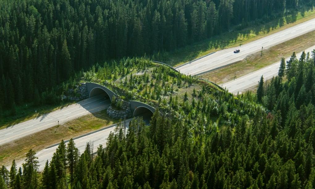 Construir 'puentes de vida salvaje' ayudaría a renos, osos, jaguares y cangrejos