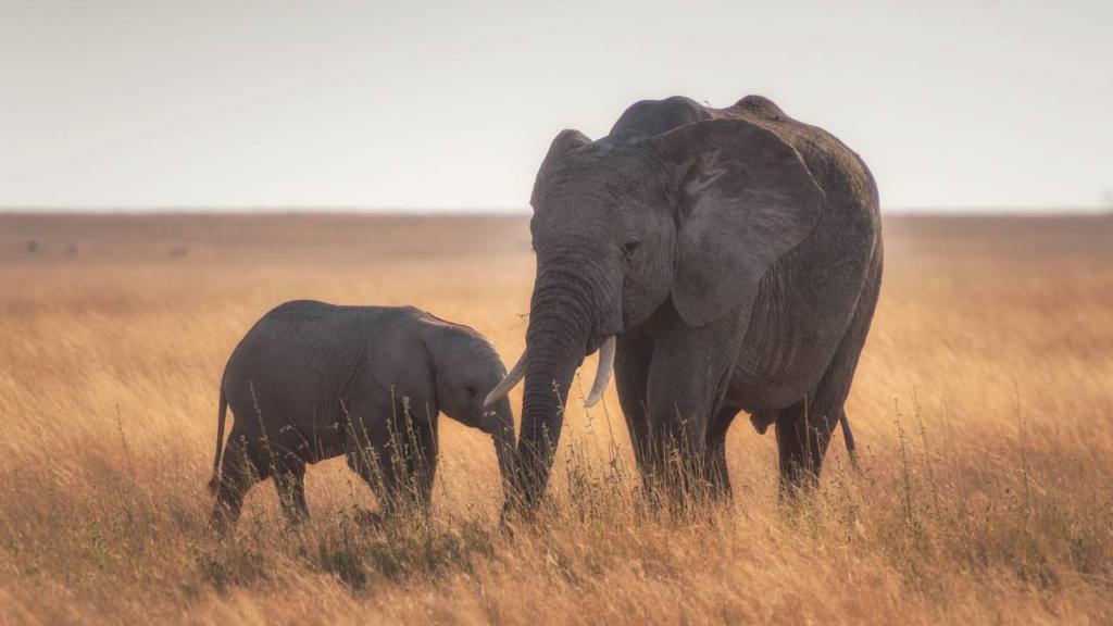 ¿Cuánto vale un elefante? Conoce a los ecologistas que hacen las sumas