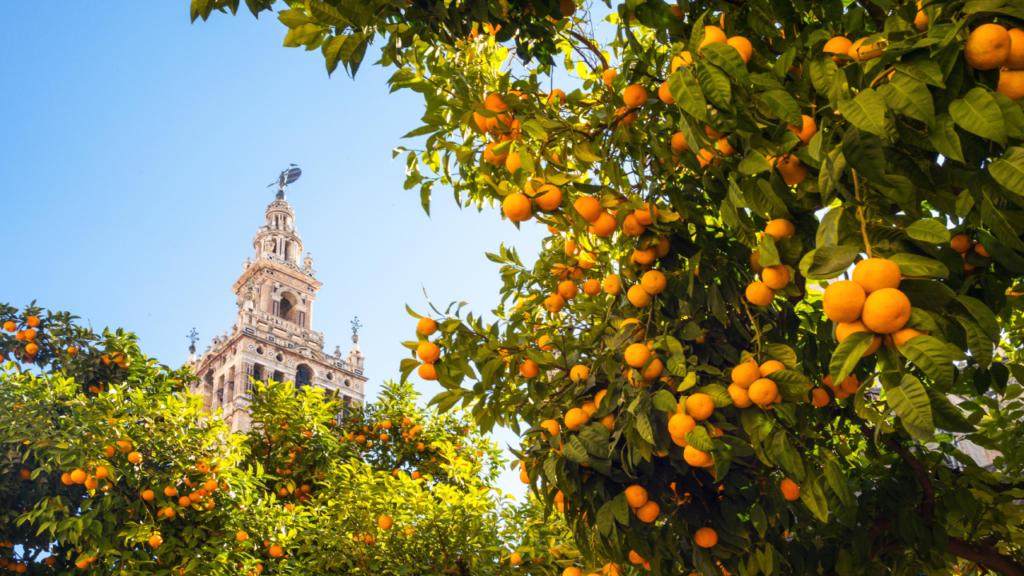 'Modelo a seguir': cómo Sevilla convierte sus naranjas en electricidad