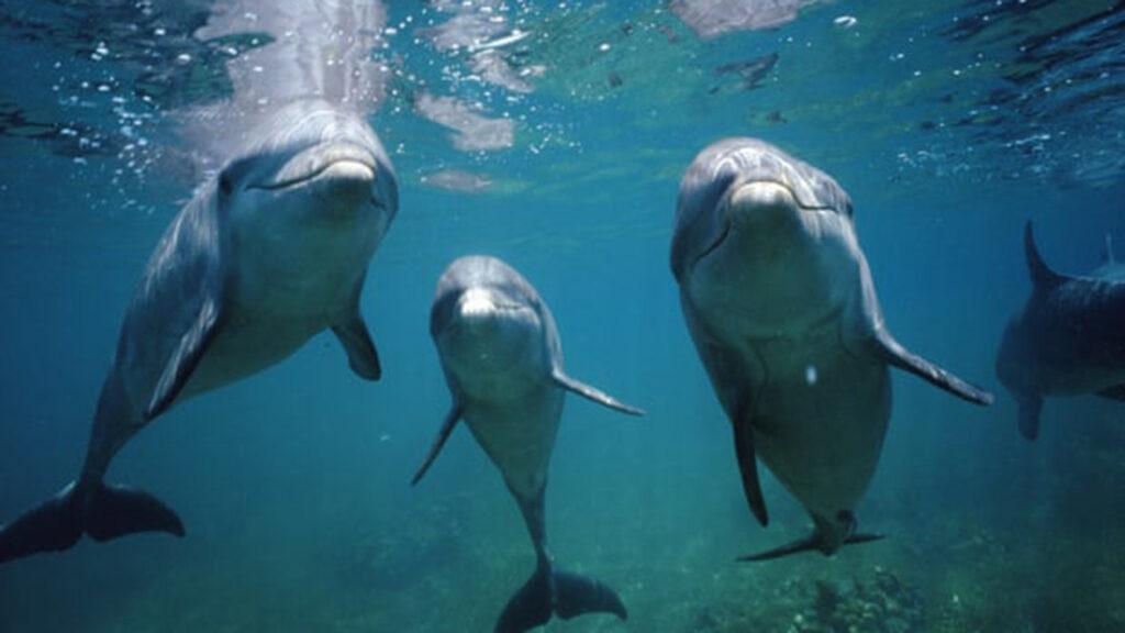 Humanos y delfines tienen rasgos de personalidad similares: estudio