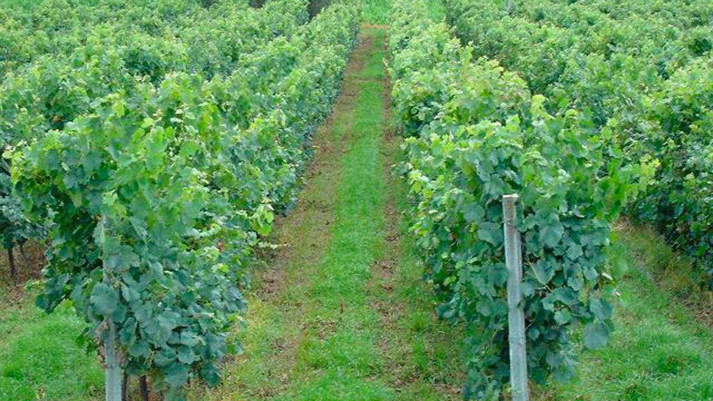 A pesar de todo, Francia aún es la casa de vinos gloriosos