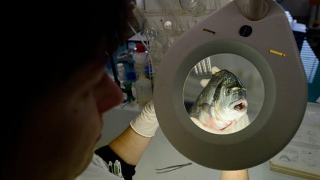 Revelación: el fraude de mariscos y pescados ocurre a escala global