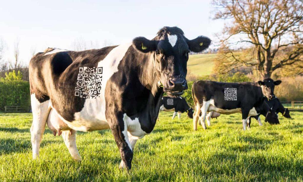 Así se engaña en abril: desde criptomonedas a redes sociales para vacas y 'fake news'