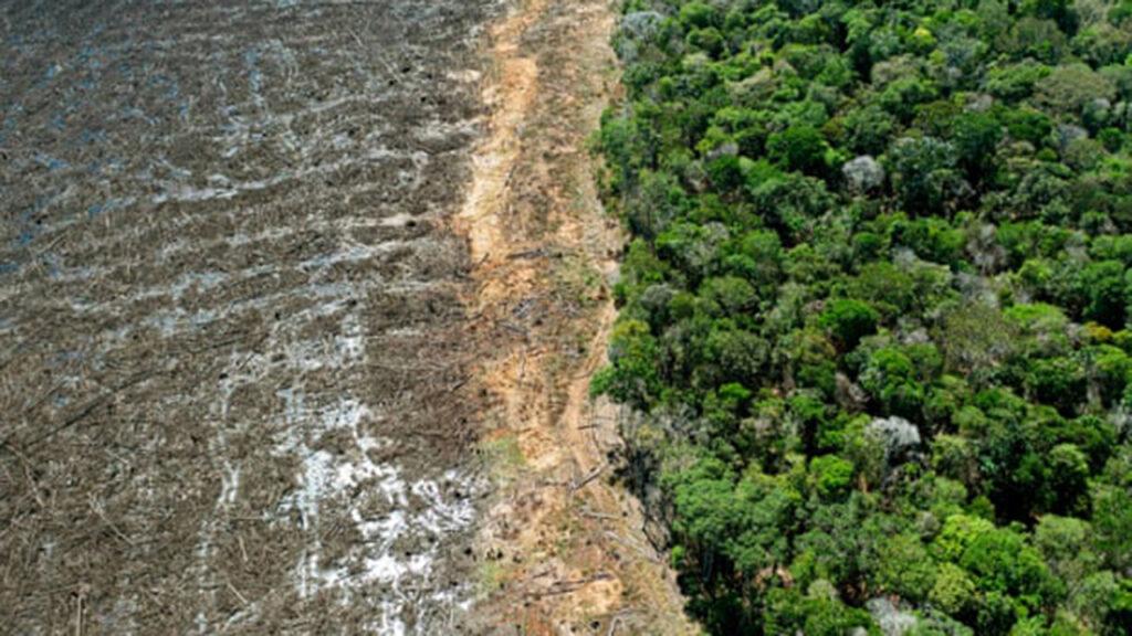 Un estudio sugiere que sólo el 3% de los ecosistemas del planeta están intactos