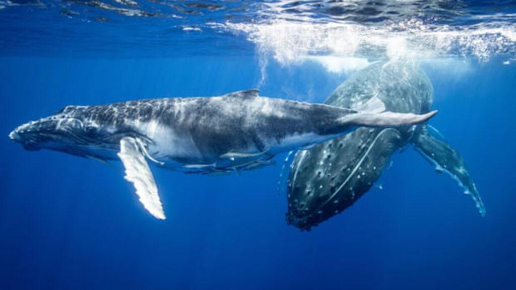 La pandemia volvió a 2020 'el año del océano silencioso', dicen los científicos