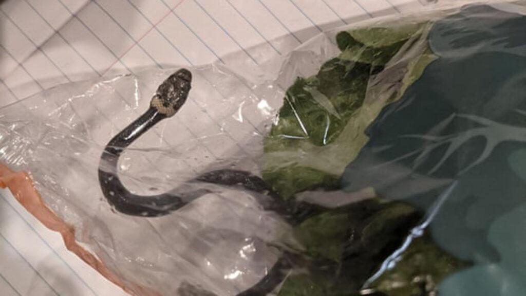 Sorpresa: una serpiente venenosa salió en una bolsa de productos frescos en Australia