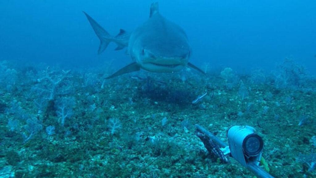 Rowley Shoals: un arrecife muestra lo que es posible cuando el hombre no toca los ecosistemas