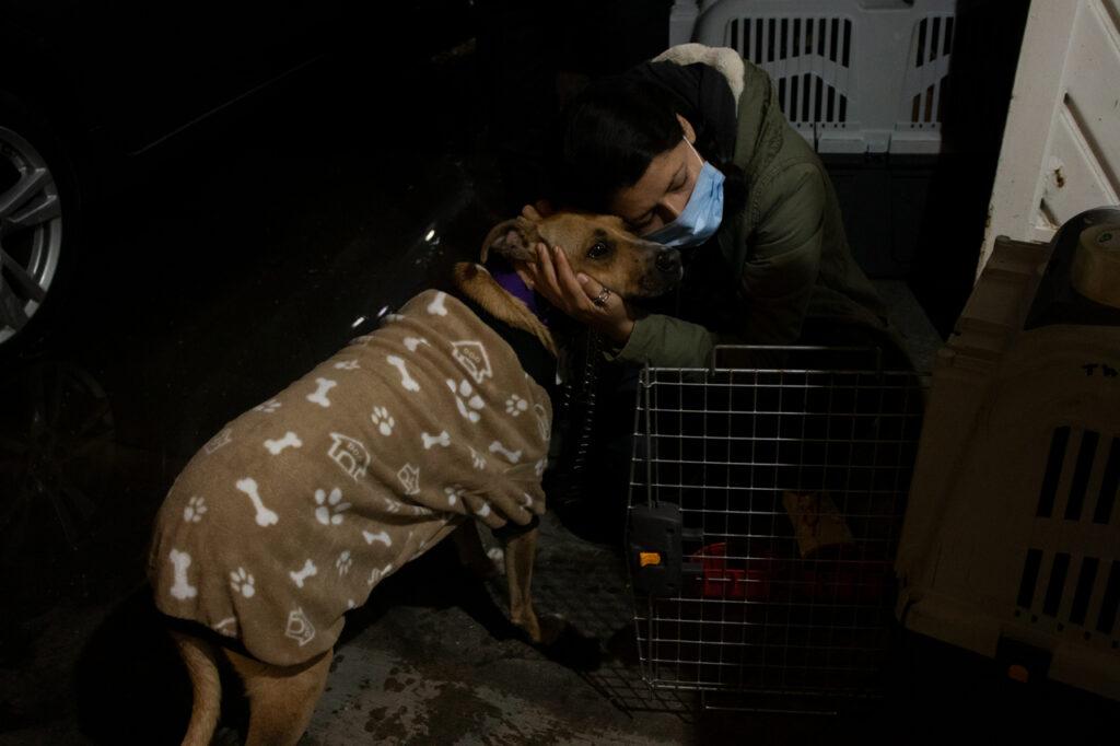 De México a Canadá: 120 perros vuelan para ser adoptados por una familia