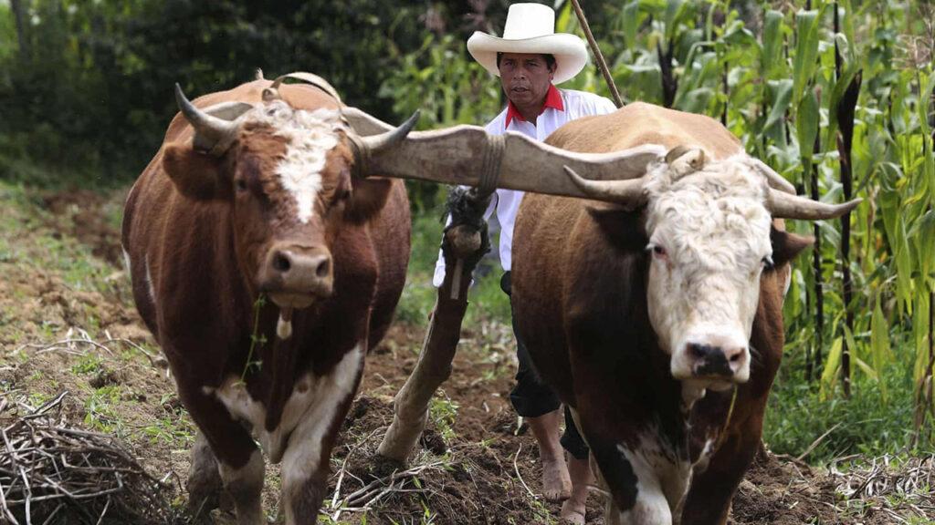 El hijo de la tierra, Pedro Castillo, promete una presidencia para los pobres de Perú