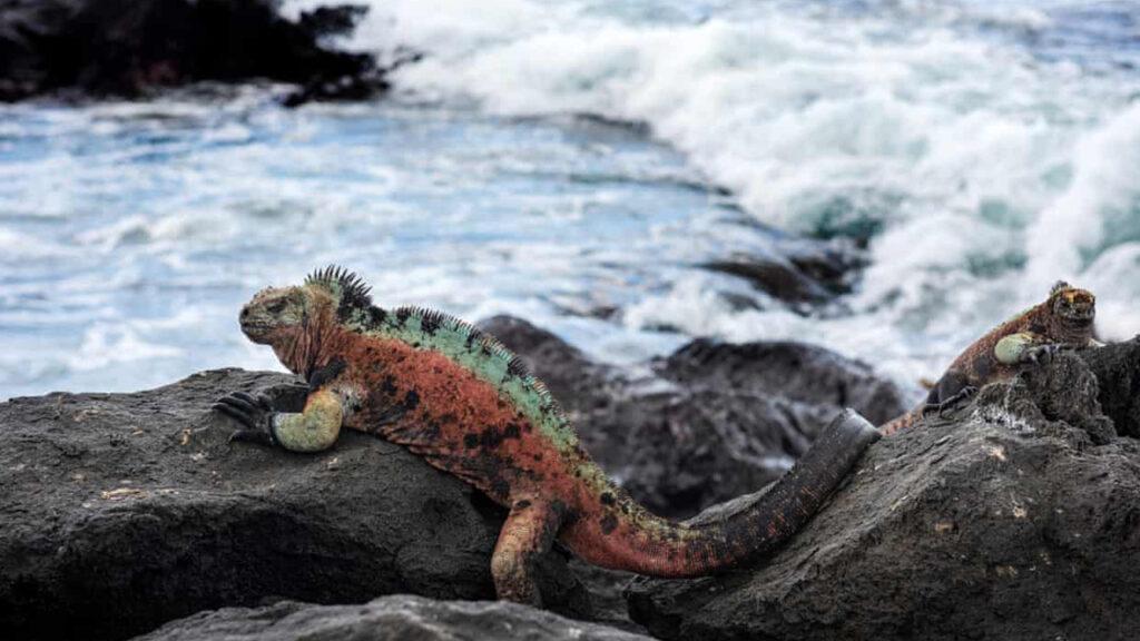 Leonardo DiCaprio encabeza una petición de 43 mdd para restaurar las islas Galápagos