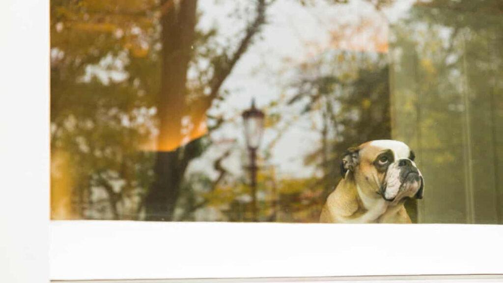 ¡Siéntate! ¡Quieto! ¡No estés triste! Cómo proteger a tu mascota de la ansiedad por la separación tras el confinamiento