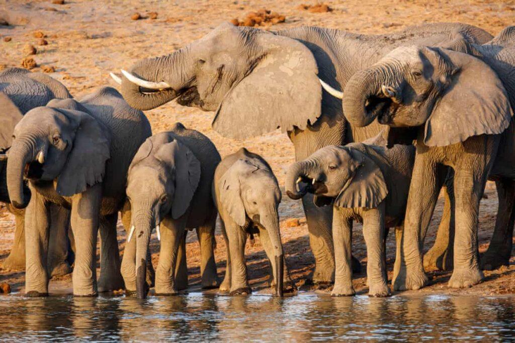 Nuevo campo petrolífero en tierras africanas amenaza la vida de 130,000 elefantes