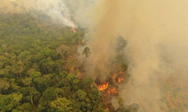 Líderes del mundo 'ignoran' la destrucción de la naturaleza como causa de la pandemia