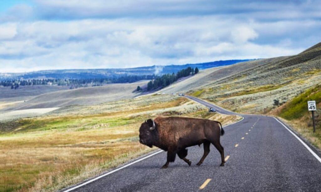 Yellowstone: el parque nacional más antiguo de EU amenazado por el cambio climático