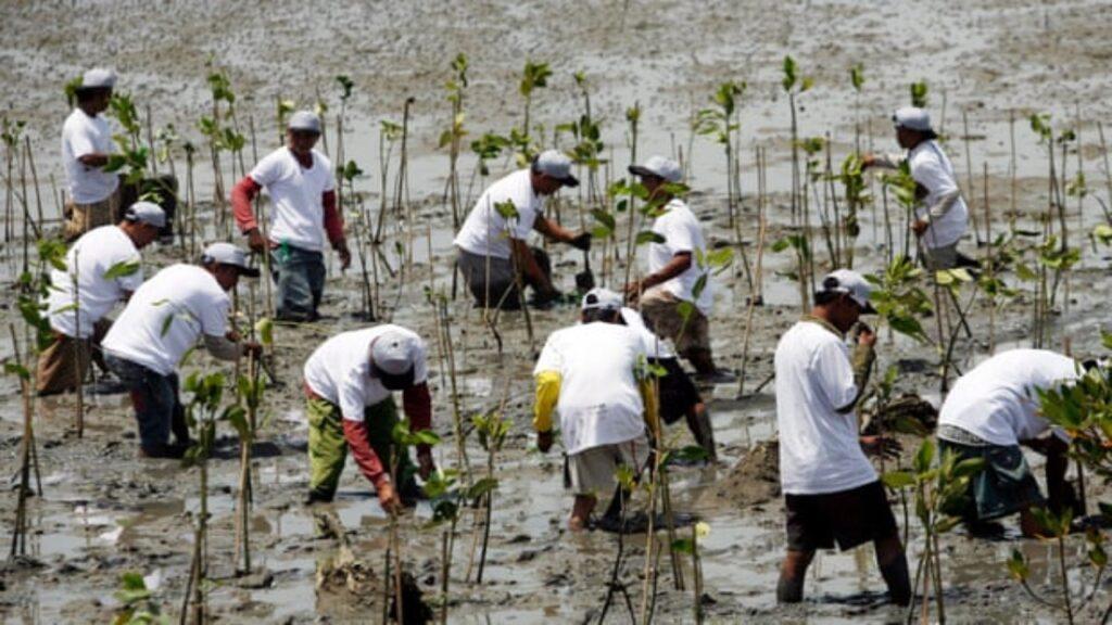 El mundo tiene que volver a ser silvestre en escala masiva para sanar la naturaleza: ONU