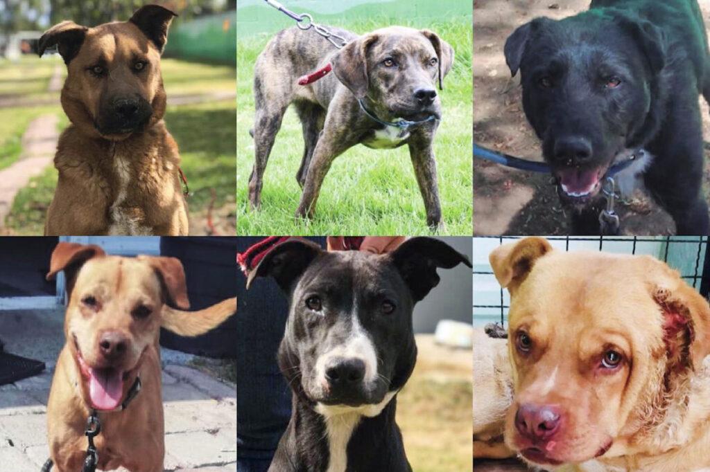 El Metro ha rescatado a 366 perros y aún tiene 19 en adopción