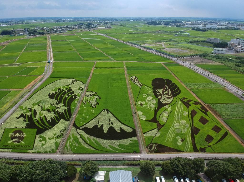 Un campo de arroz se vuelve arte en Japón para celebrar los Juegos Olímpicos