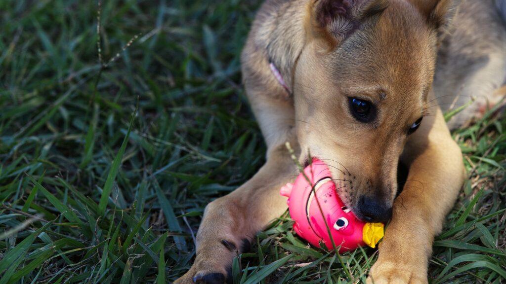 Día Mundial del Perro: Aquí La-Lista de accesorios para consentir a tu mascota