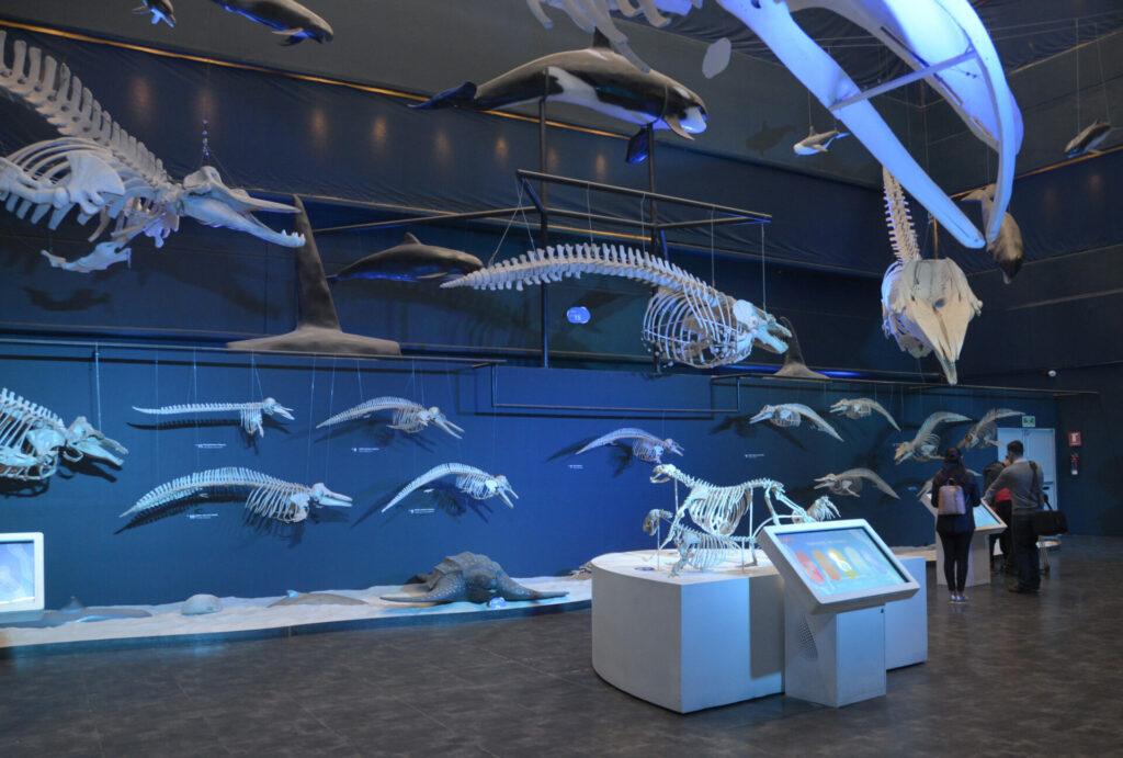 El museo Universum reabre con un túnel de inmersión a la ciencia