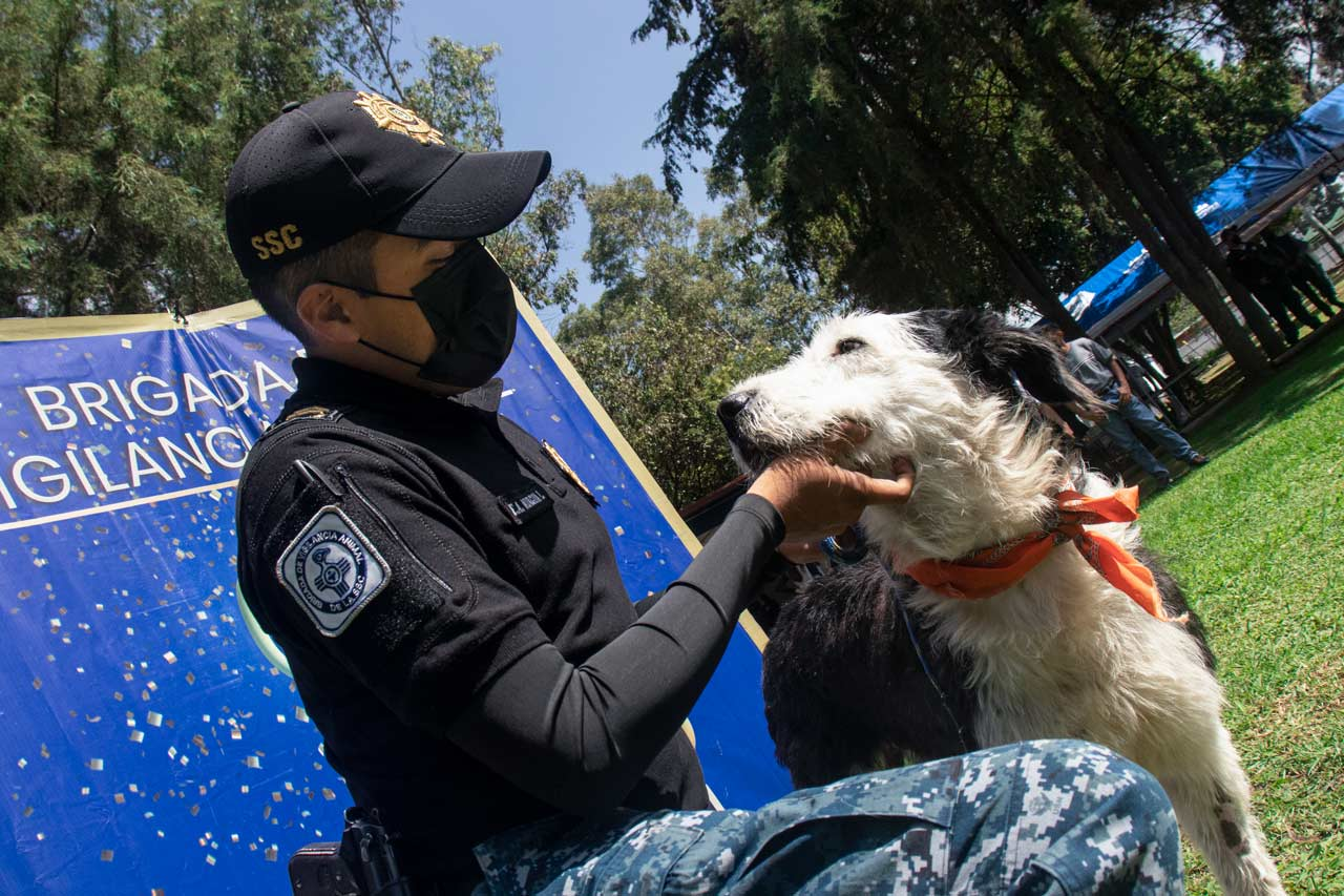 Fotogalería: La Brigada de Vigilancia Animal cumple 16 años de rescatar especies en CDMX