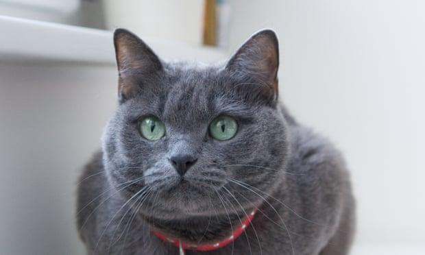 La decisión de sacrificar a 154 gatos descubiertos en una operación de contrabando genera indignación en Taiwán