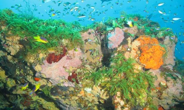 Las zonas muertas se extienden a lo largo de la costa de Oregon y el Golfo de México, según estudio
