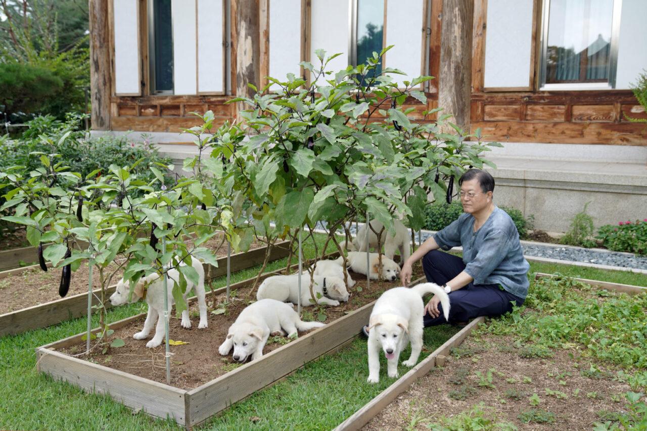 El presidente surcoreano sugiere prohibir el consumo de carne de perro