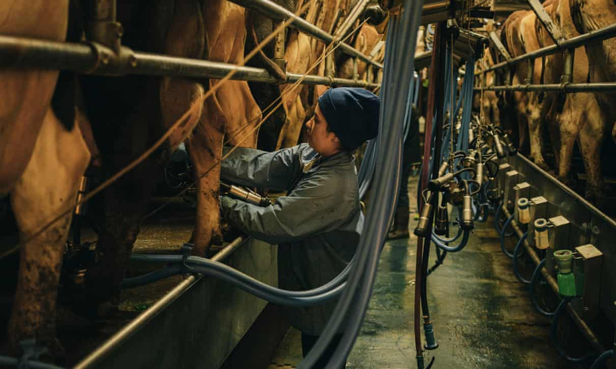 El 90% de los subsidios agrícolas mundiales perjudican a las personas y al planeta