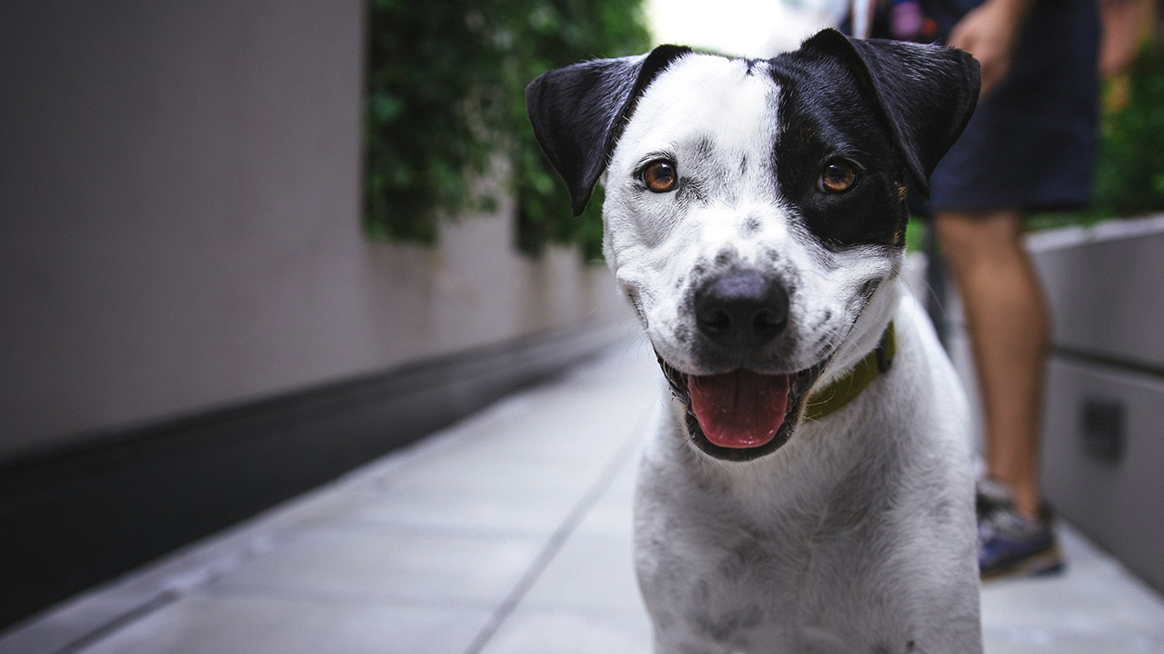 ¿Cómo cuidar a las mascotas antes y después de un sismo? Aquí una guía