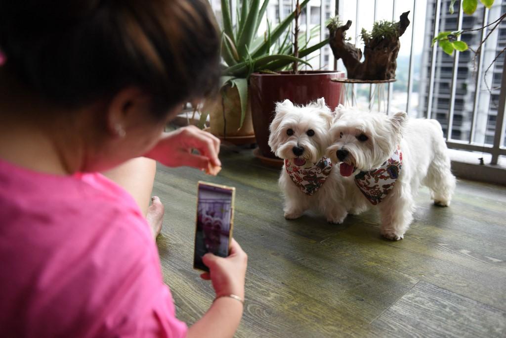 'Dogfluencers': los perros que causan furor en Instagram y en Singapur