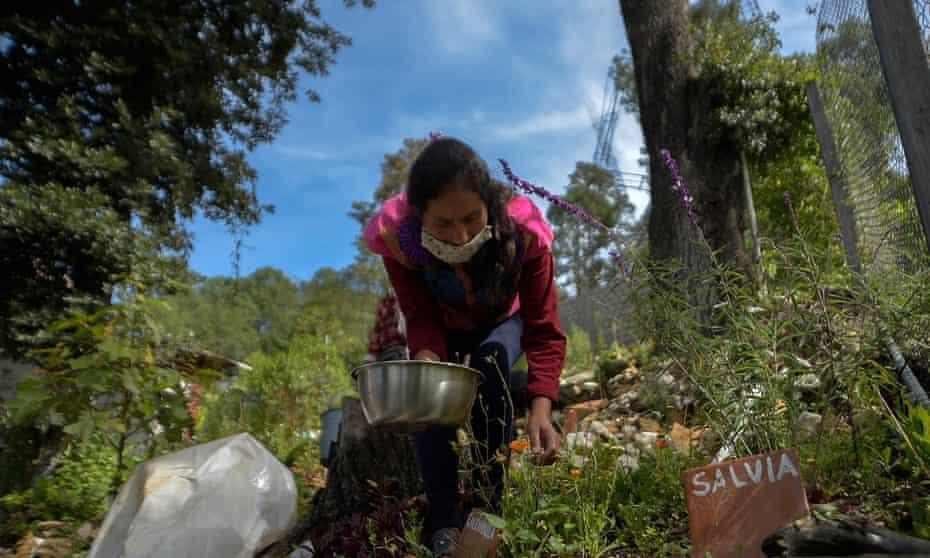 Regular la medicina tradicional en México 'podría violar los derechos'
