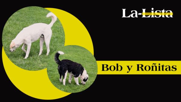 Perros que ayudan a otros perros, Bob y Roñitas