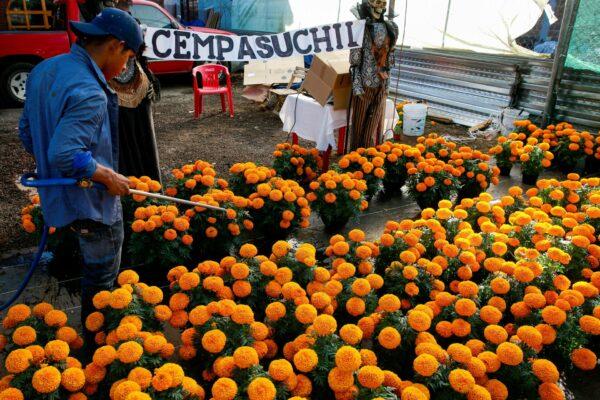 El Día de Muertos anima la esperanza de los vendedores de cempasúchil